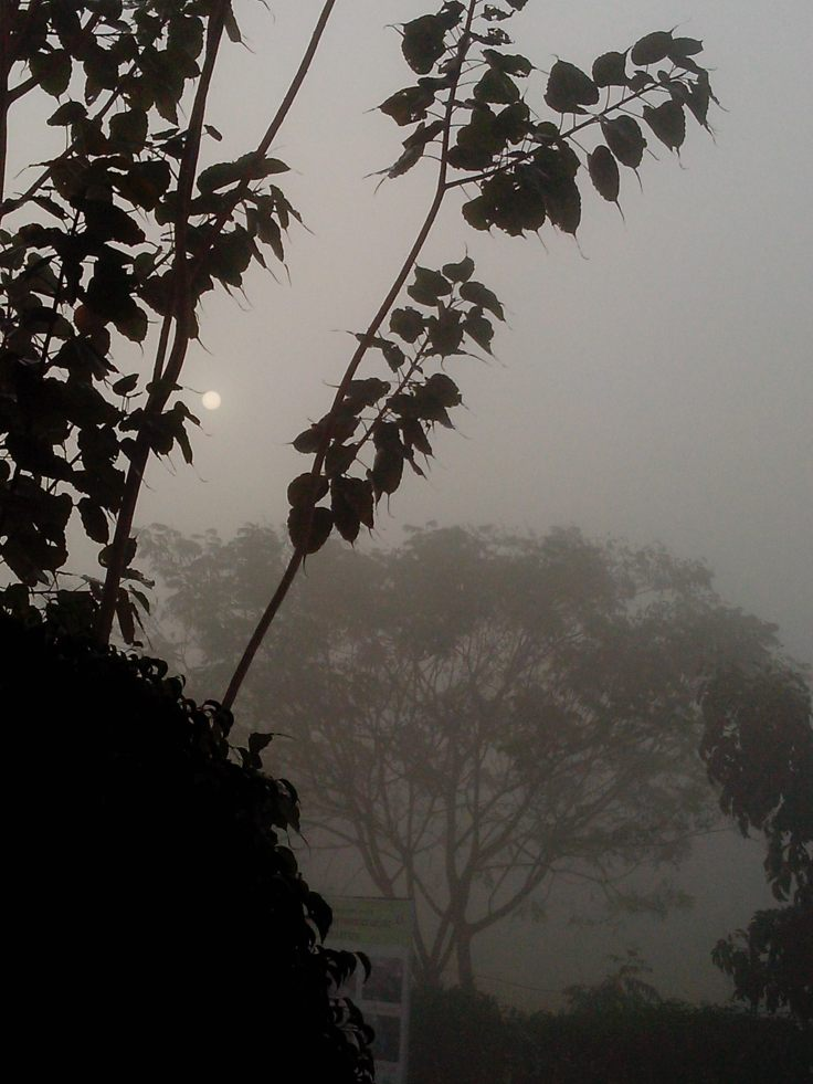The hidden sun in the deep fog..