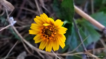 Little gorgeous flower at Narmada park